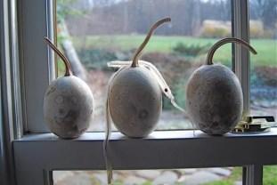 gourds-and-ladybug