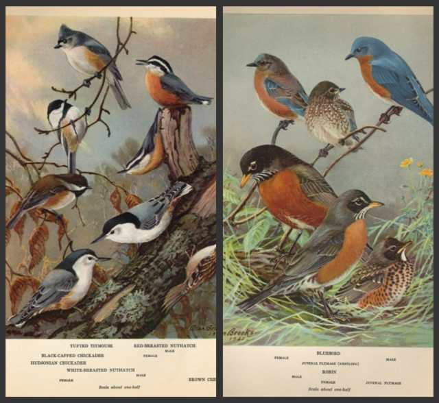 birdcollage