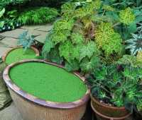 'instant' water garden: try seasonal troughs