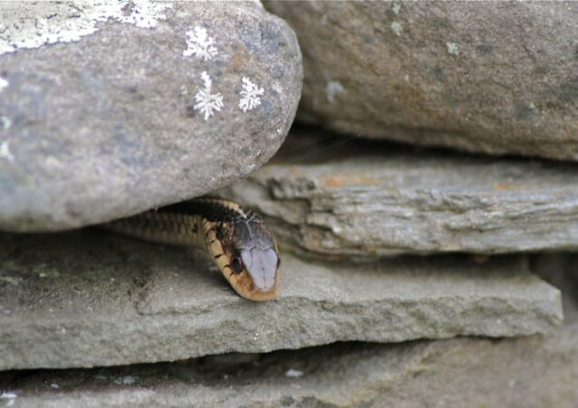 first snake 2