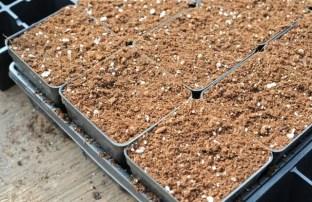 seed-starting-3
