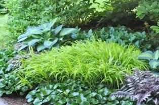 underplanting-2010