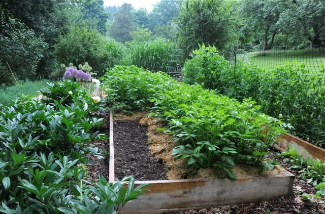 what to plant now for a fall vegetable garden - A Way To Garden