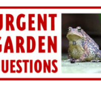 from the forum: can i compost weeds?