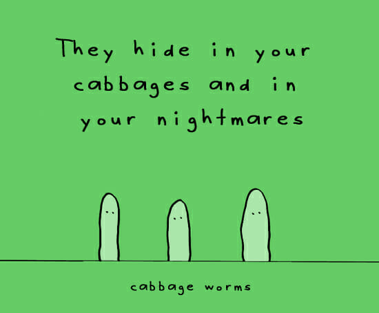 thecabbageworms