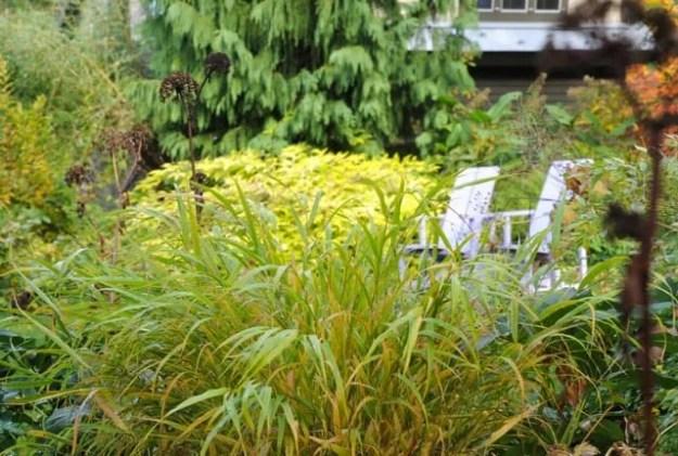gold-bramble-in-fall