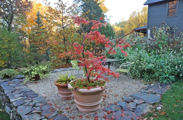 My Secret To Overwintering Japanese Maples A Way To Garden
