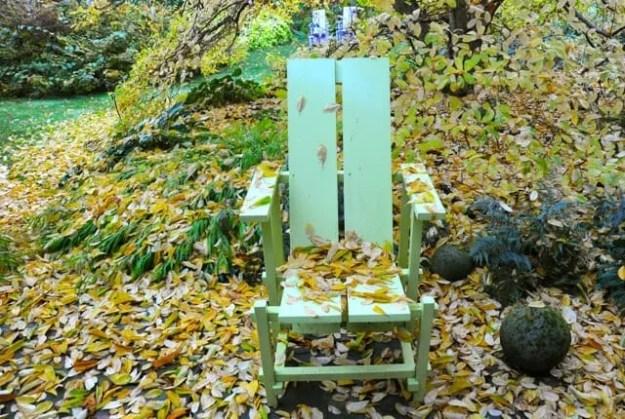 magnolia-ballerina-fall-foliage