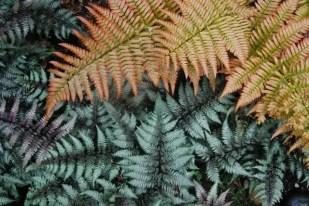 colorful-ferns
