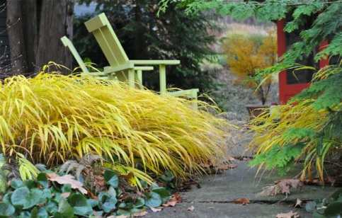 hakonechloa-hangs-on