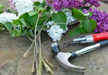 hammering-lilac-stems