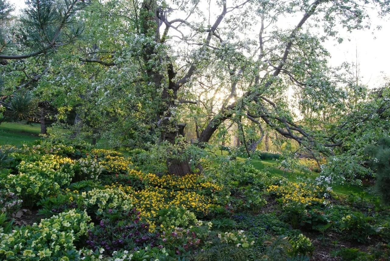 Planes de jardín perenne para el sol o la sombra parcial | Puerta bastante púrpura
