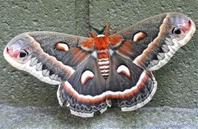 moth of all moths