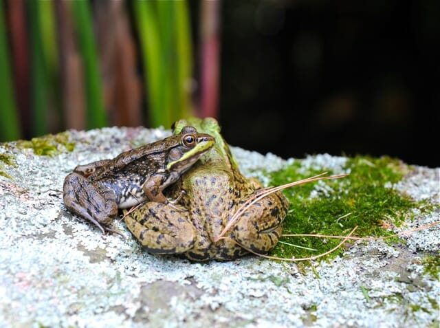 you can lean on me frog