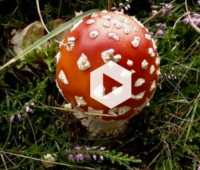 more about mushrooms: a video