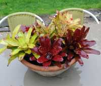 a bromeliad centerpiece, and the man who planted my first shrubs 20+ years ago