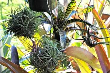 bromeliad-mobile-dave-burdick