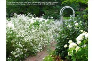 white-garden-froth-of-blooms-jeanne-illenye-f4effa3dd391e2de3d22d448314c8efdf79e0f24