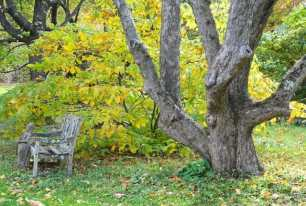 old-apple-and-aesculus-october
