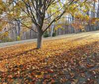 7 fall-cleanup tasks you shouldn't skip, with ken druse