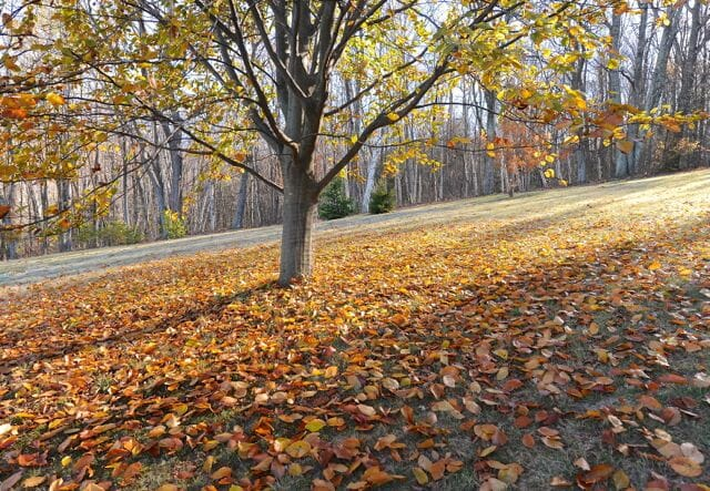 7 fall cleanup tasks you shouldn t skip with ken druse a way to garden - Fall gardening tasks ...
