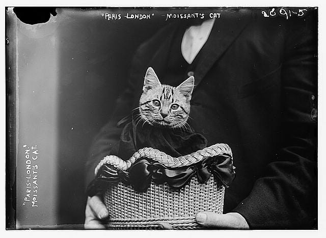 vintage photo of cat in basket from Library of Congress