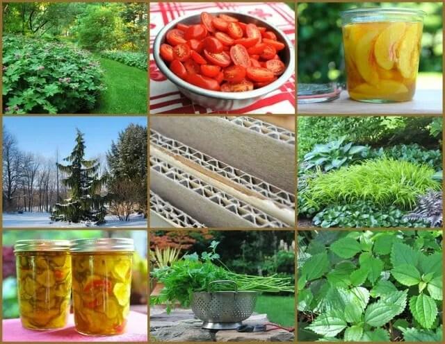 top garden storires 2012