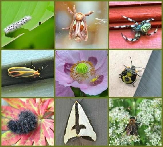 bug-collage2