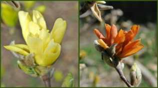 magnolia-before-and-after
