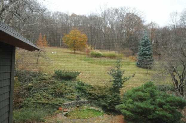 view-from-upstairs-window-november