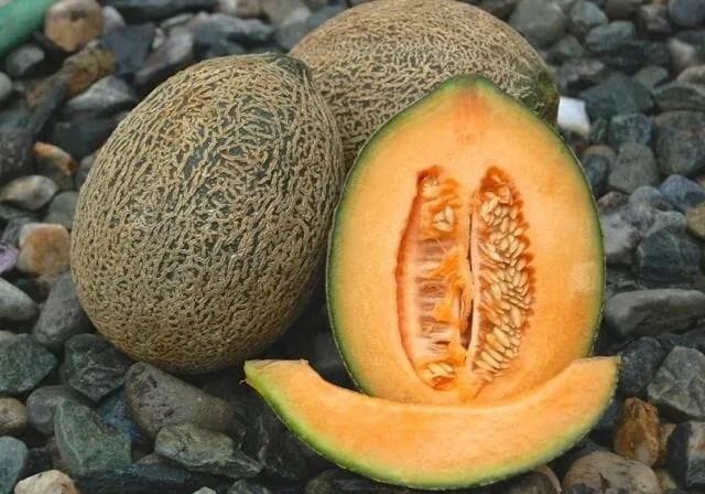 hale's best melon