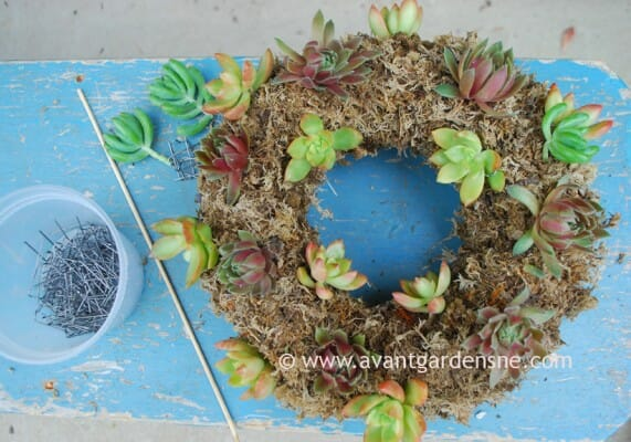 living succulent wreath how-to by avant gardens