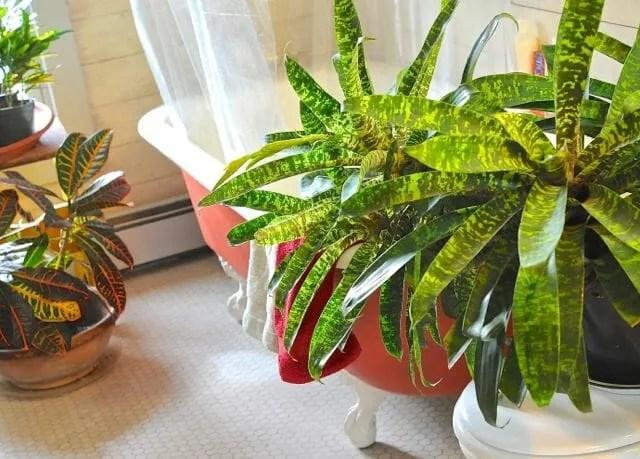 washing the houseplants