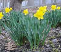 bulb-growing basics: a springtime recap