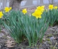 bulb-growing basics: a springtime recap