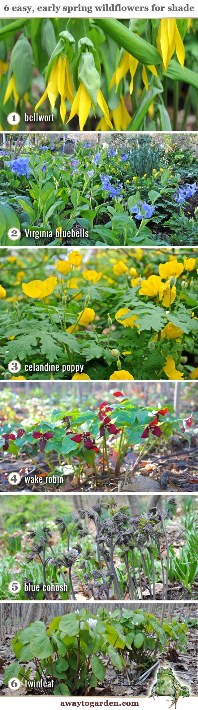 6 early native spring wildflowers for shade a way to garden 6 wildflowers for shadenames mightylinksfo