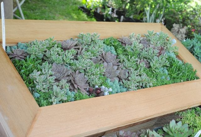 Box planted with succulents by Avant Gardens
