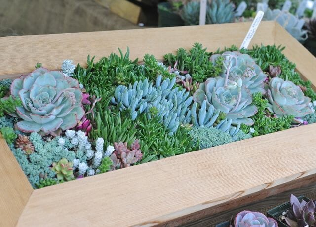 weatherproof succulent box garden by Avant Gardens' Katherine Tracey
