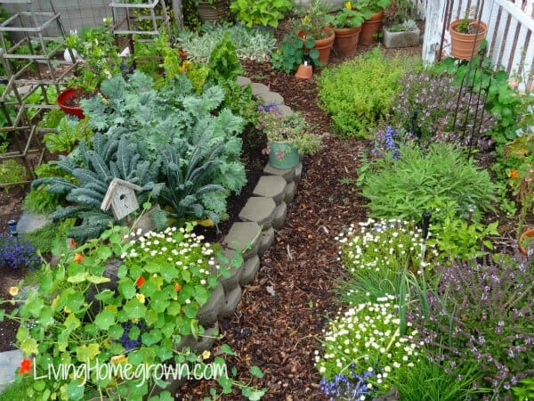 A portion of Theresa Loe's 1/10th-acre homestead garden