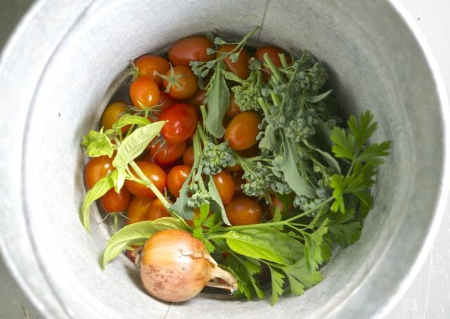 pail of vegetables, just picked