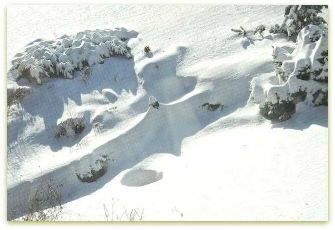 Feb. 9, 2013 snowfall, Margaret Roach garden