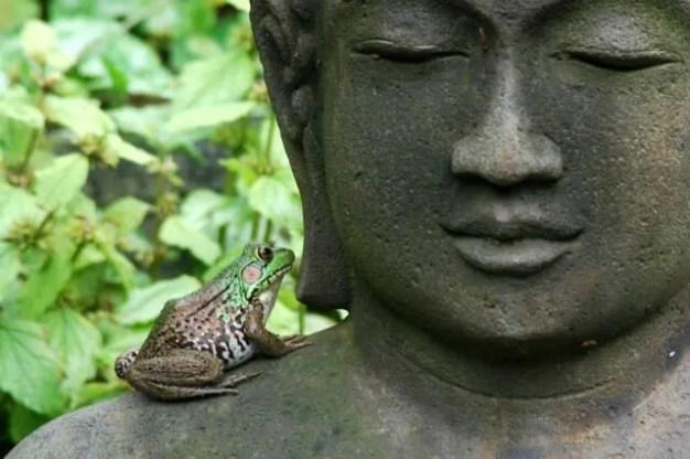 frog on Buddha