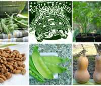 Turtle Tree Biodynamic Seeds offerings