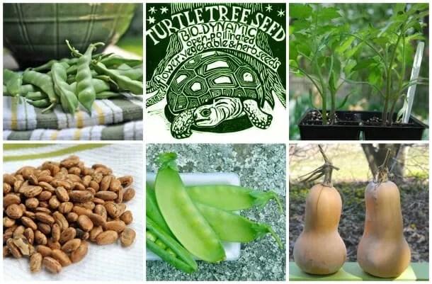 Turtle Tree Biodynamic Seeds offerings