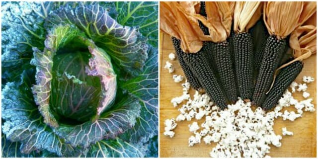January King cabbage and black popcorn from Uprising Seeds