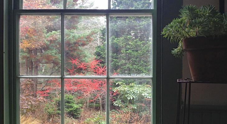 View out the window at Avant Gardens