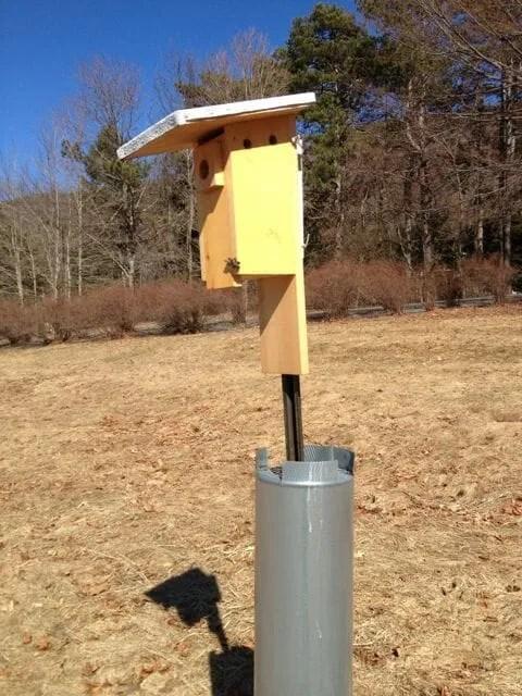guard for bluebird box
