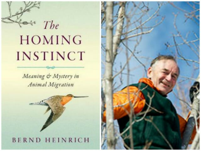 bernd heinrich the homing instinct