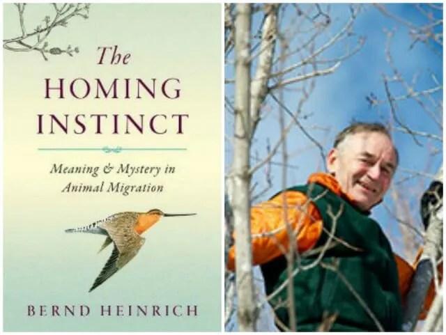 bernd heinrich the homing instinct