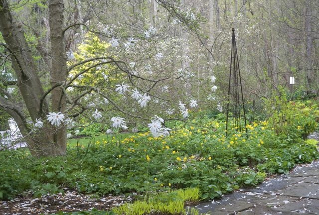 spring magnolia bed 2014